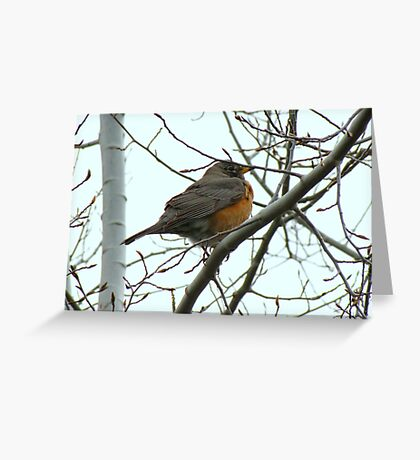 American Robin ~ Bend,Oregon Greeting Card