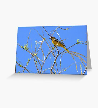 Bullock's Oriole ~ Male Greeting Card