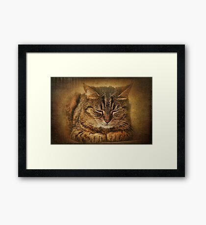 If you want to learn how to relax, study a cat! Framed Print