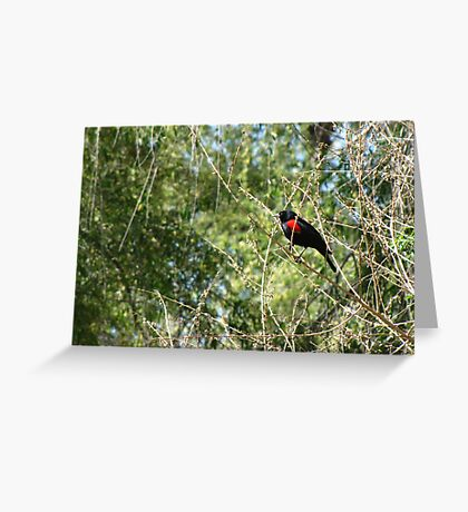 Red-winged Blackbird ~ Male Greeting Card