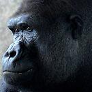 Gorilla by Lolabud