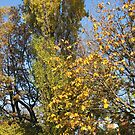 Golden Leaves against a Blue Sky by BlueMoonRose