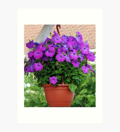 Hanging Basket with Velvety Purple Petunias Kunstdruck