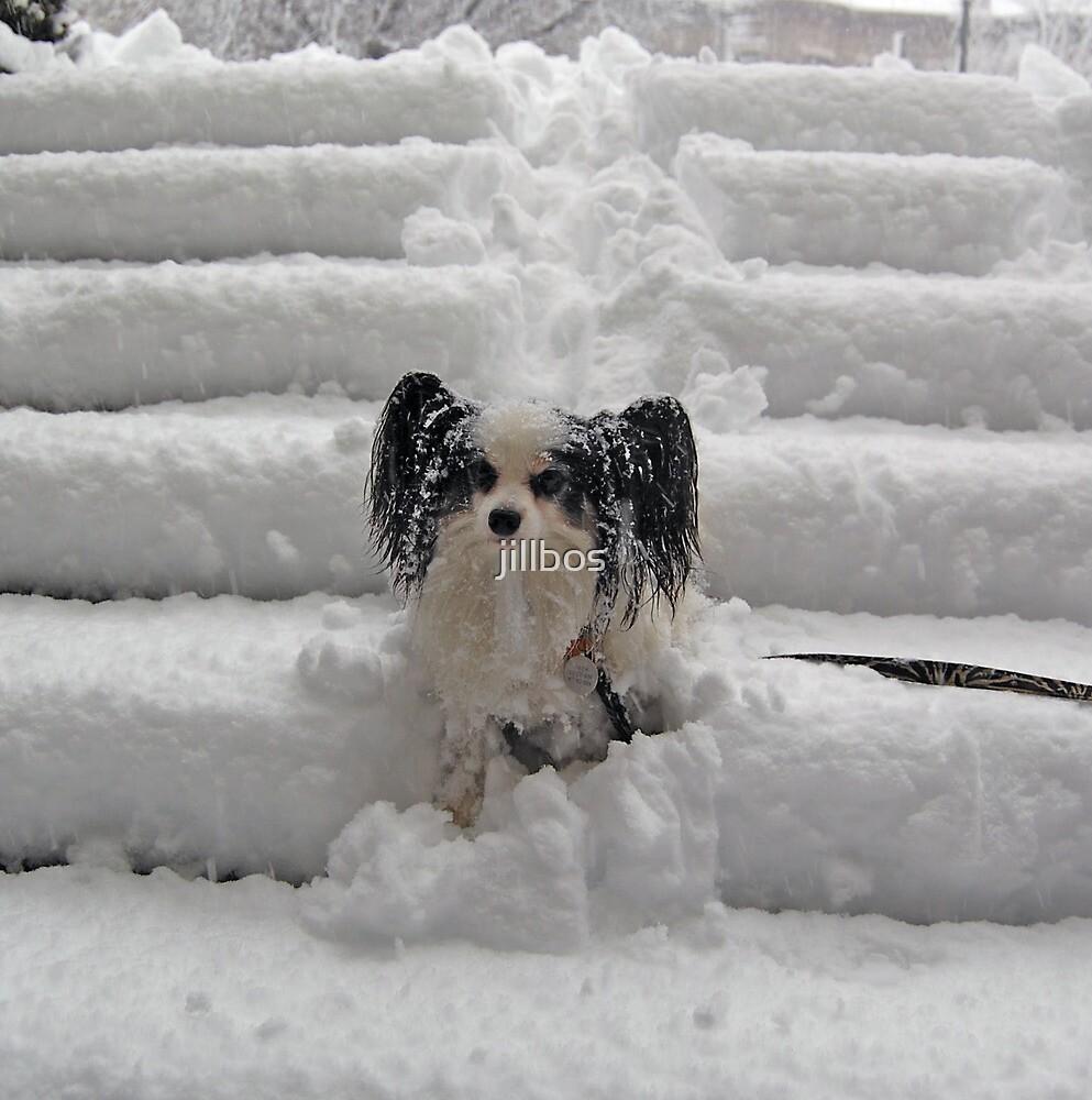 Jack in the snow by jillbos