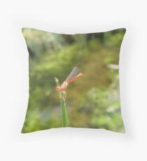 Damselfly ~ Desert Firetail (Male) Throw Pillow