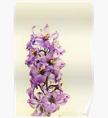 Purple Larkspur Delphinium Poster