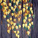 Birch in Autumn by Karirose
