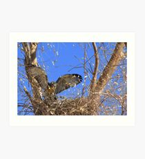 Red-tailed Hawk ~ Babies XII Art Print