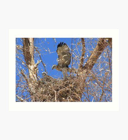 Red-tailed Hawk ~ Babies IX Art Print
