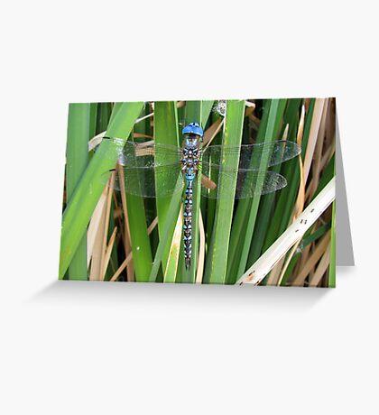 Dragonfly ~ Blue-Eyed Darner (Male) Greeting Card