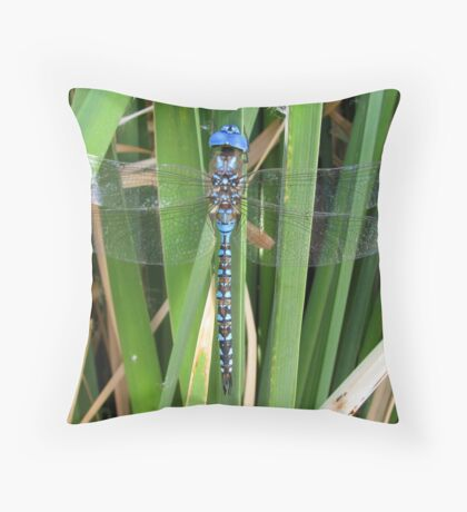 Dragonfly ~ Blue-Eyed Darner (Male) Throw Pillow