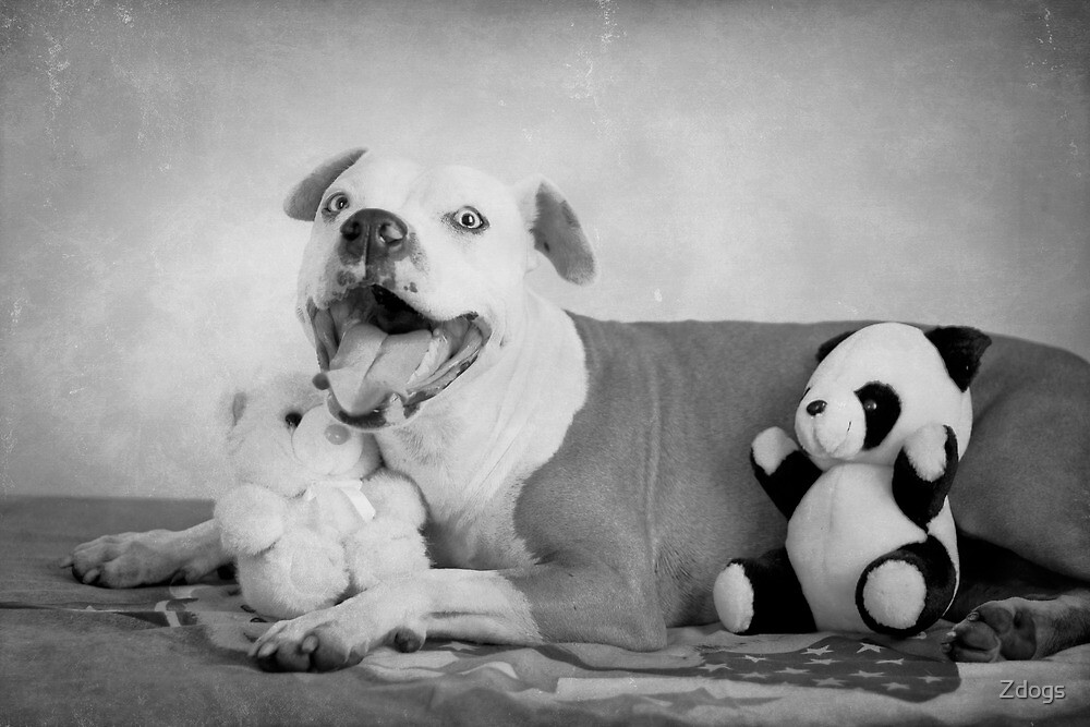 I Do Love My Teddies!  by Zdogs