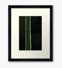 Flower Spike Framed Print