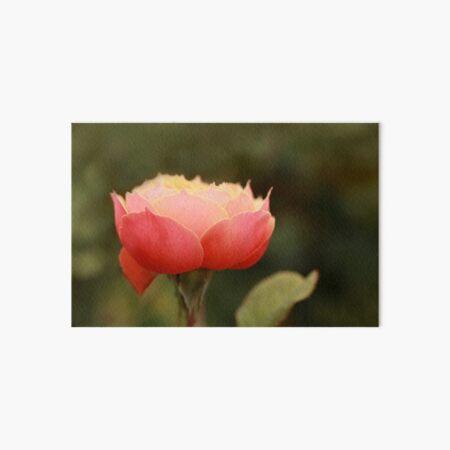 Coral & Pink Rose Art Board Print