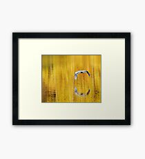 Blue Heron on golden pond Framed Print