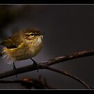 Willow Webler 2 by RAY AGIUS