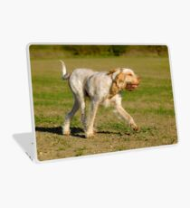 Orange and White Italian Spinone Dog in Action Laptop Skin