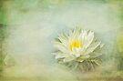 Lily Fair by KBritt