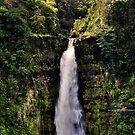 Akaka falls II by PJS15204