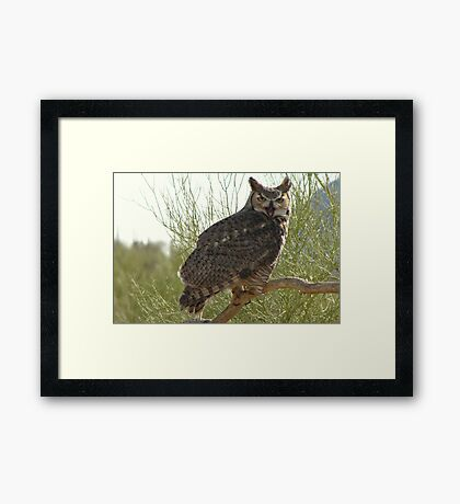 Great Horned Owl ~ Captive (4yrs) Framed Print
