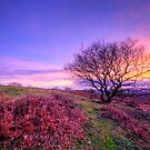 Beacon Hill Sunrise 1.0 by Yhun Suarez