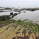 Green Gray of the Sea  by TerrillWelch