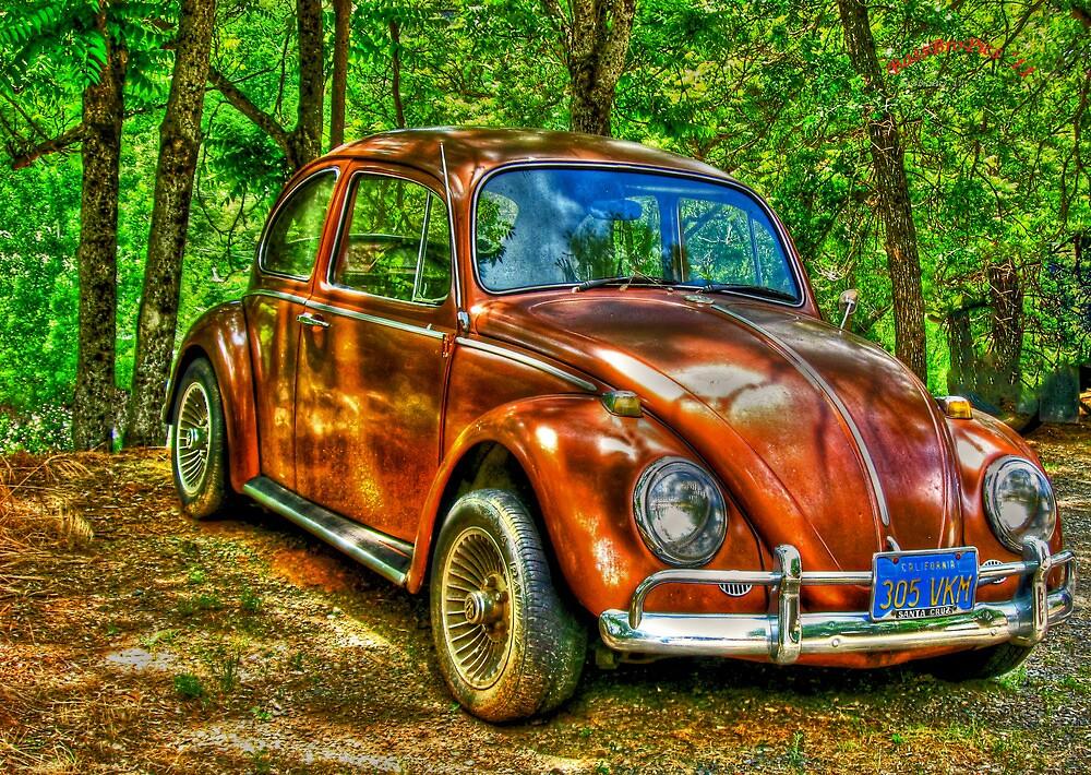 Mariposa Bug by Steve Walser