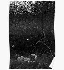 Litter in Bushes Poster