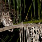 Whoo Whooo by Mike Fischetti
