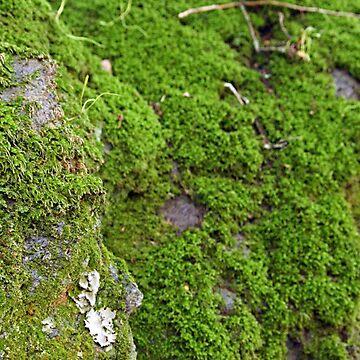 Moss  by friskodisko