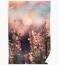 Sunny Heather & Bokeh Poster