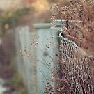 Winter gate and fence by mariakallin