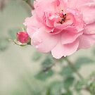 Romantic Rose by mariakallin