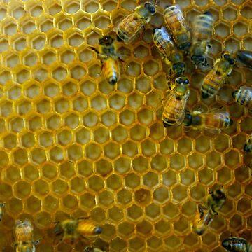 Beehive by friskodisko