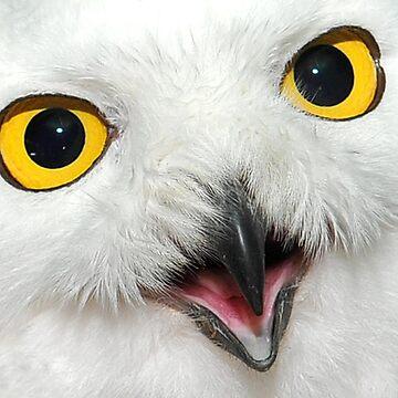 Snow Owl - High Definition by Kalashnikov3395