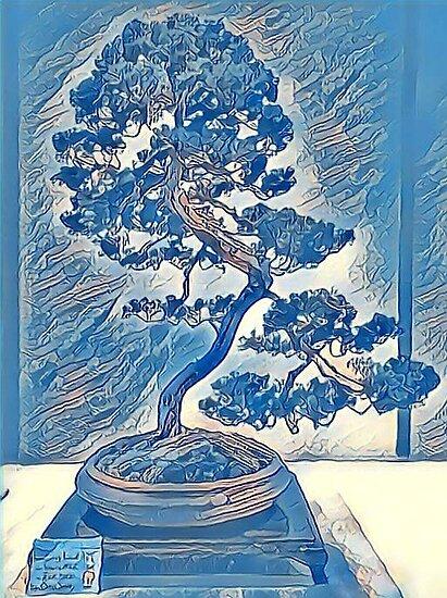 Bonsai Blue Juniper