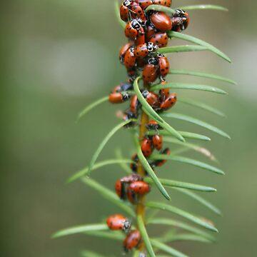Ladybug Kebab by friskodisko