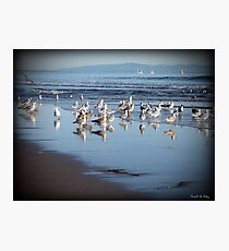 Dancing Sea Gulls Photographic Print