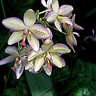 Orchids  by Don Wright