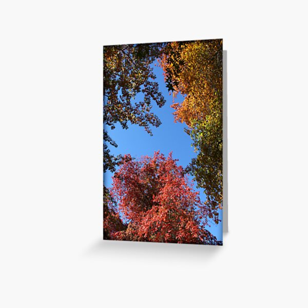 ~ Things Are Looking Up ~ Greeting Card