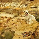 ROCK DOG by Helen Akerstrom Photography