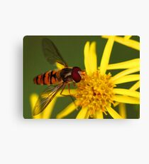 Insect Feeding Canvas Print