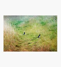 Magpies in the Field Photographic Print