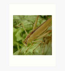 grass hopper in creamcolor Art Print