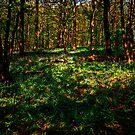 Sun Dappled Wood by John Hare
