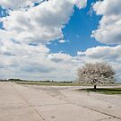 cotton field by helveticaneue