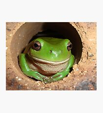 Green Tree-Frog in Hole Photographic Print