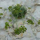 Wall Weed by Fara