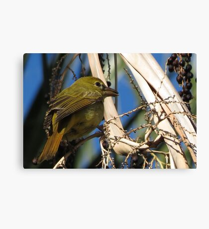 Summer Tanager ~ Female Canvas Print