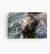 Dreamy Sea Lion Canvas Print
